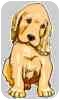 Redbone Coonhound/Hound (Unknown Type) Mix Dog for adoption in Waupaca, Wisconsin - Dizzy