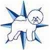 Bichon Frise Dog for adoption in Tulsa, Oklahoma - Adopted!! Ben - FL
