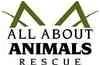 Domestic Shorthair Kitten for adoption in Glendale, Arizona - Marble Merlot