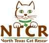 Domestic Shorthair Cat for adoption in McKinney, Texas - Cricket