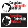 Chinchilla for adoption in Mississauga, Ontario - Sadie