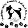 Labrador Retriever Mix Dog for adoption in Red Oak, Iowa - Savannah