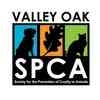 Domestic Shorthair/Domestic Shorthair Mix Cat for adoption in Visalia, California - Fella